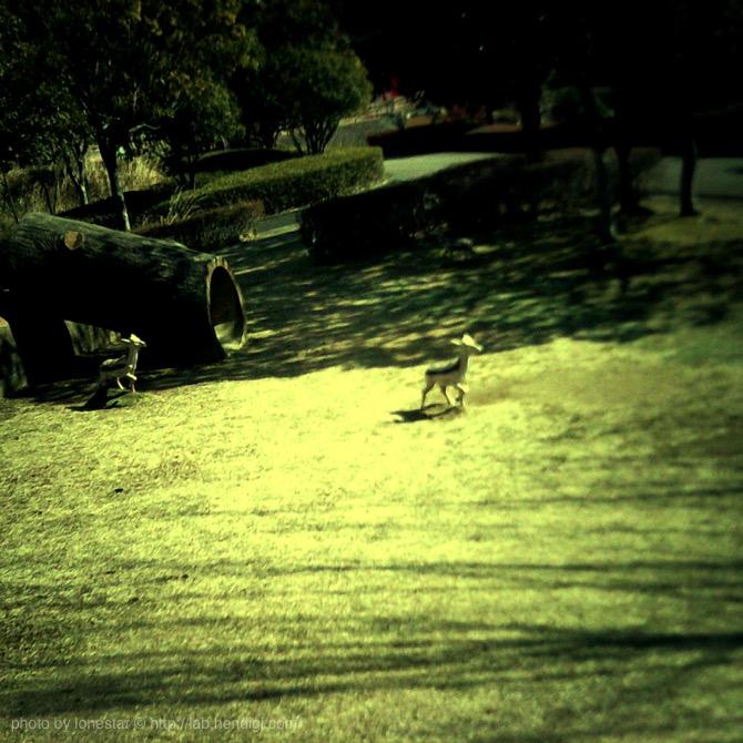 ドーナツカメラ 作例写真