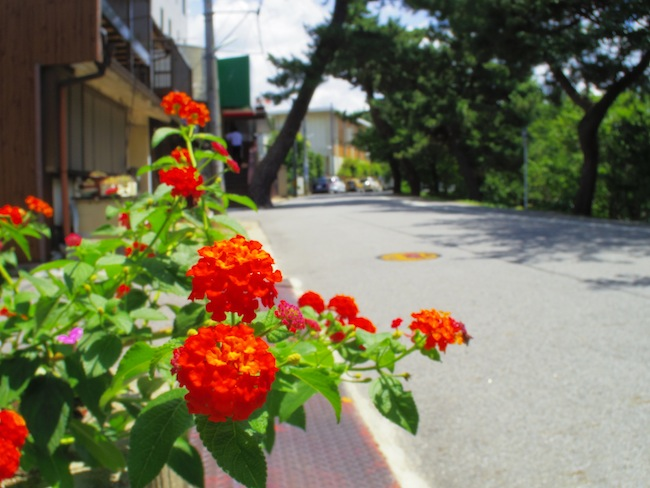 04 TOY LENS WIDE 作例
