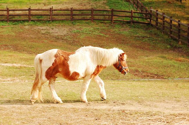 鞍ヶ池公園 馬