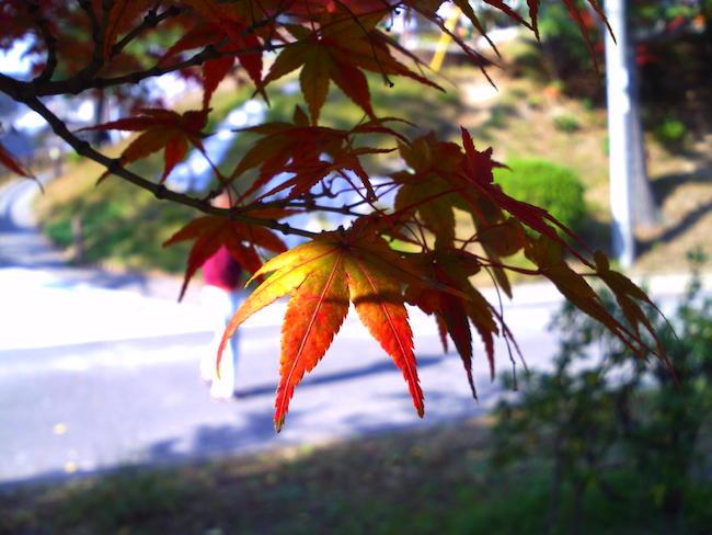 Kenko DSC50N:紅葉