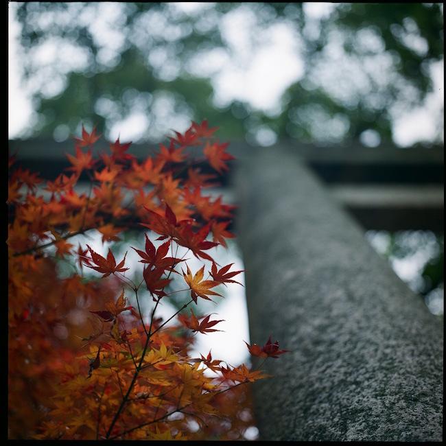 Hasselblad 500C/M 紅葉