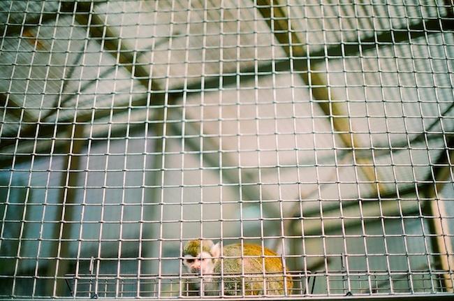 東公園 猿