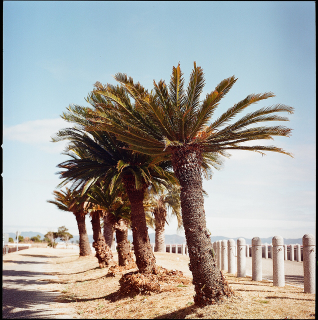 Hasselblad 500C/M : Lomography Color Negative 100 120
