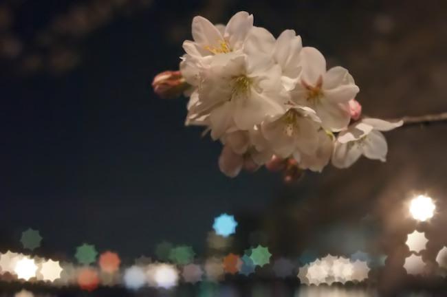 乙川 夜桜 2014