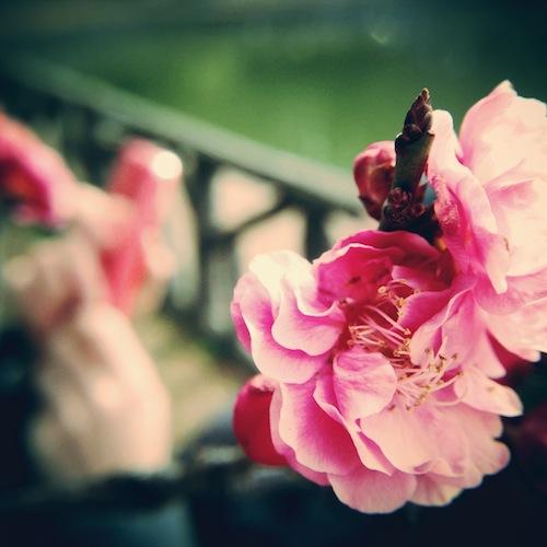 iPhoneで梅を撮るなら持って行きたい3つのレンズ
