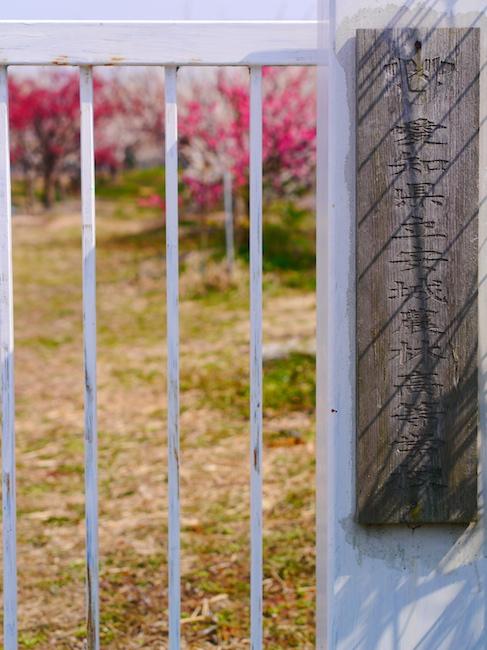 安城農林高校実習梅園