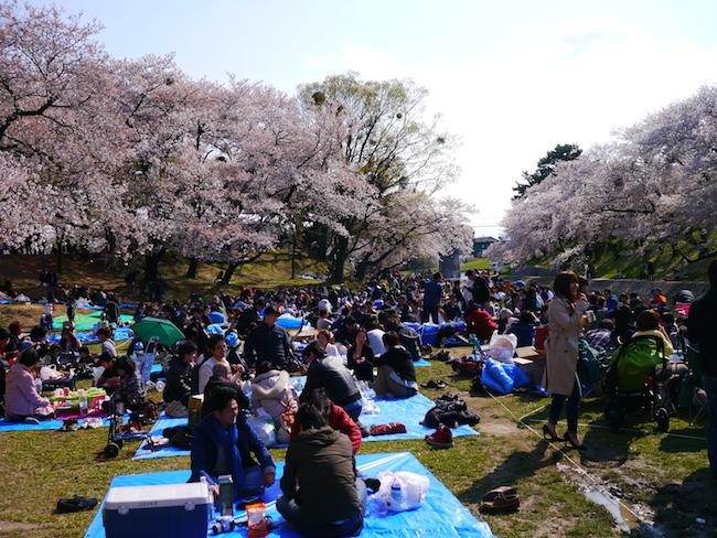 岡崎城 お花見