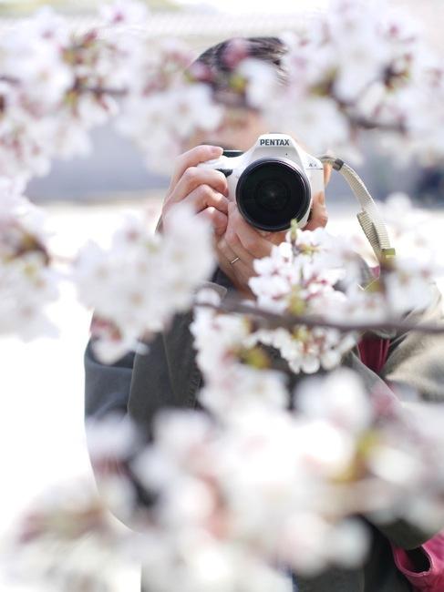 桜とツマー