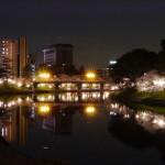 岡崎 桜 ライトアップ