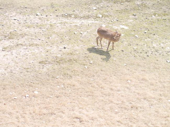 名古屋城 鹿