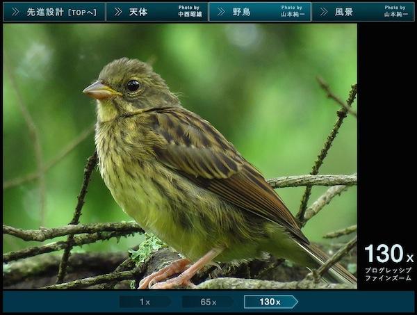 SX60 HS 野鳥