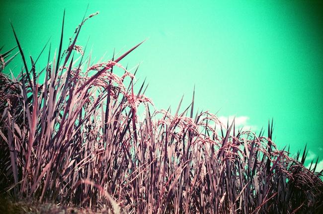 Purpleフィルム