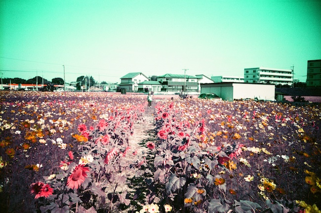 Lomochrome Purple XR 100-400