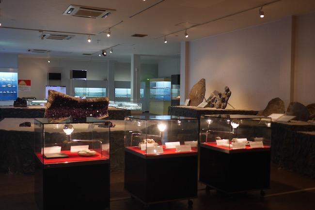 貝や化石の博物館