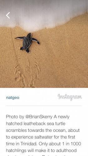 ナショジオ instagram