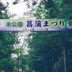 東公園 菖蒲まつり