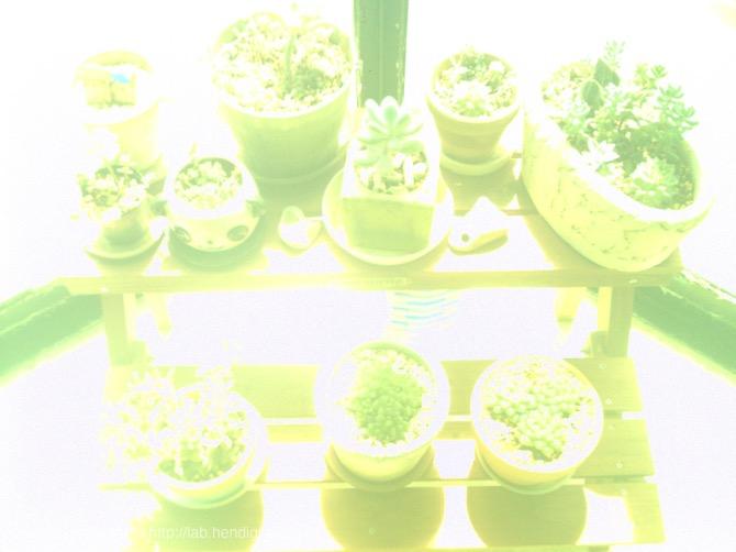緑かぶりの写真