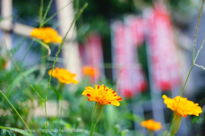 SLR Magic 28mm f/2.8