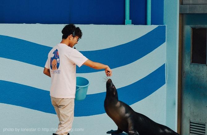 竹島水族館 アシカショー