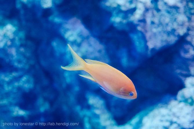 竹島水族館 写真