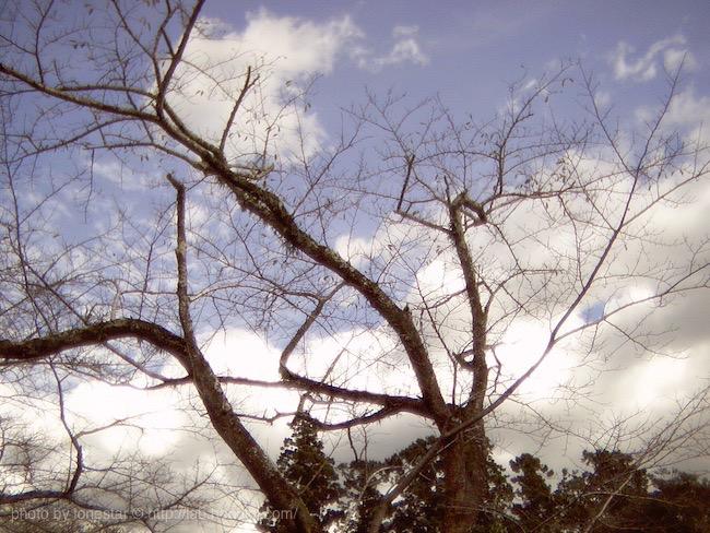 ミノックス デジタルスパイカメラ 写真