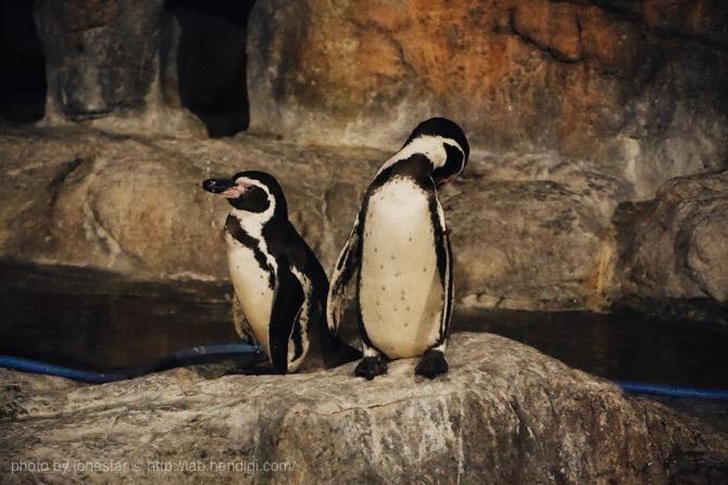 のんほいパーク ペンギン