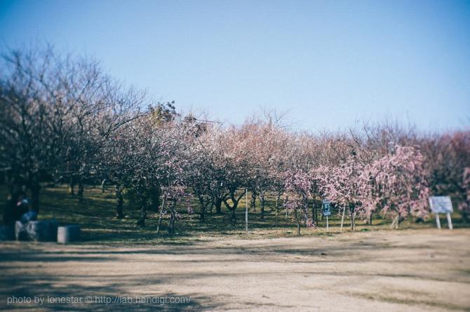 平芝公園 梅林