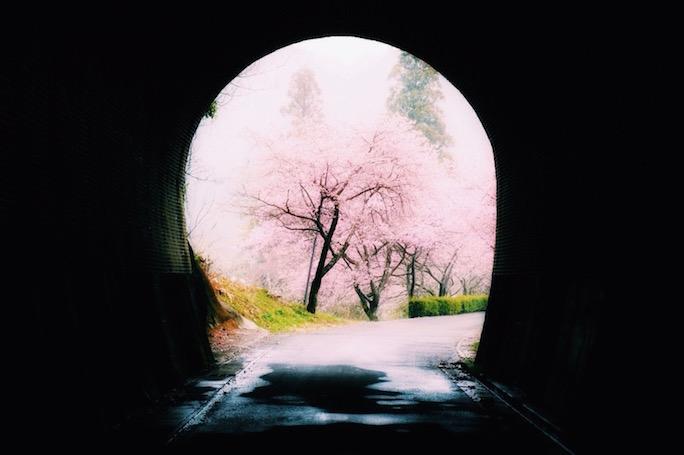 長篠 河津桜 トンネル