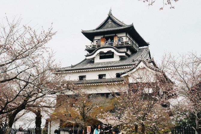犬山城 桜 2016