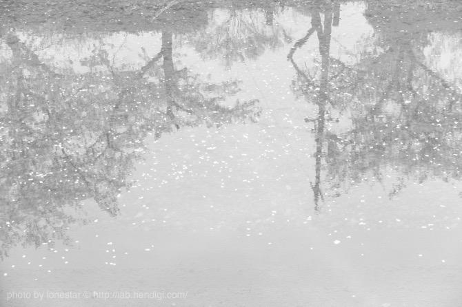 桜 モノクロ