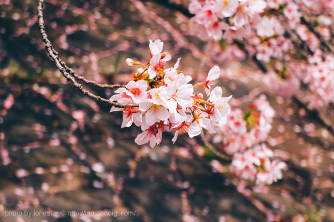 FUJIFILM X30 桜