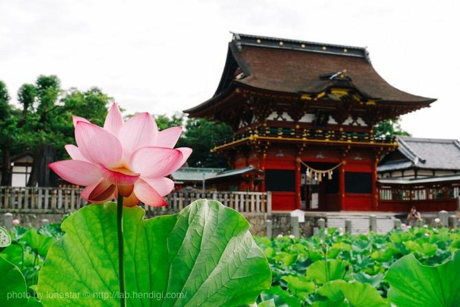 伊賀八幡宮 蓮の花