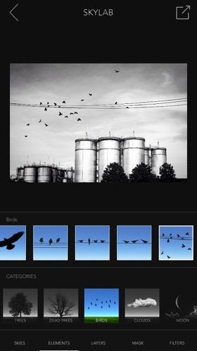鳥を増やす アプリ