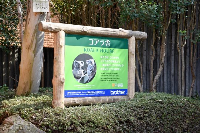 東山動物園 コアラ