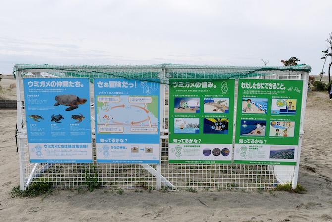 中田島砂丘 ウミガメ