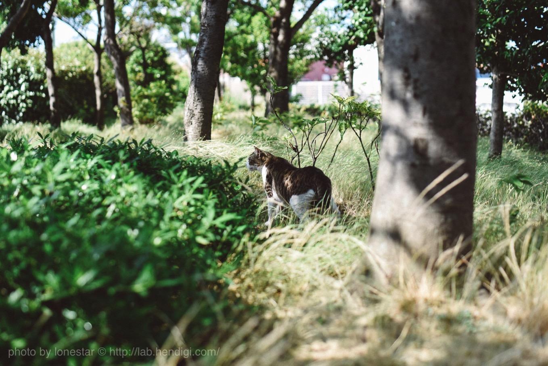 名古屋港 猫