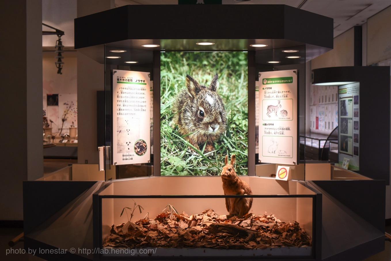市川 自然博物館