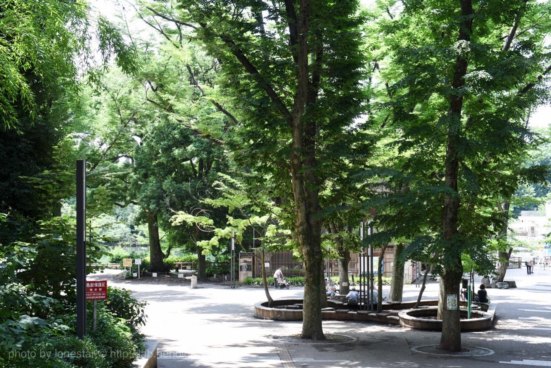 火花 井の頭公園