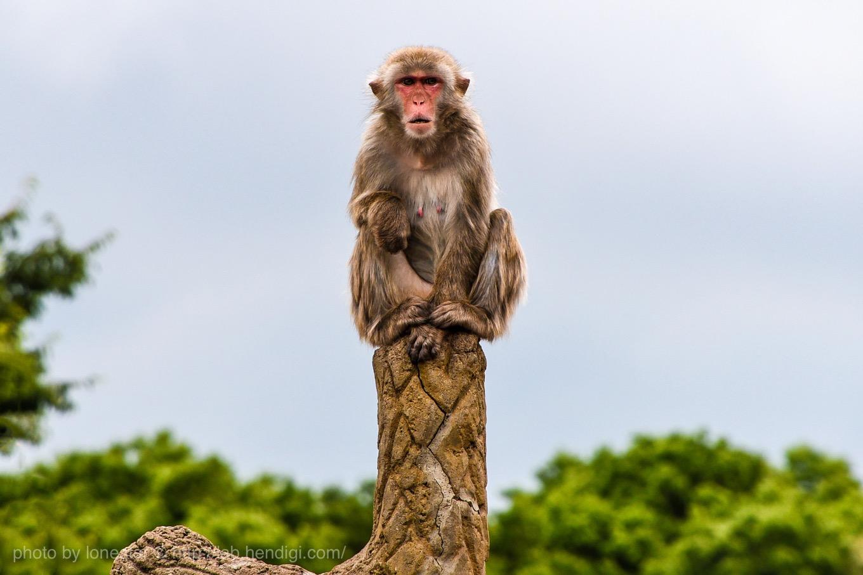 市川市動植物園 猿山