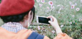 木曽三川公園でコスモスを撮ってきました!秋の花物語は11月5日まで!