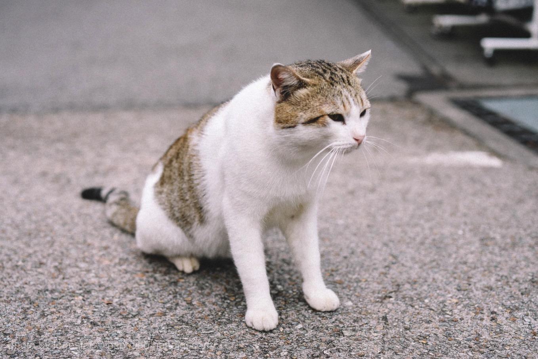 おちょぼ稲荷 猫