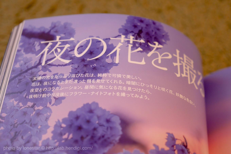 夜の花 撮影