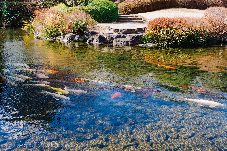 回遊式池泉庭園