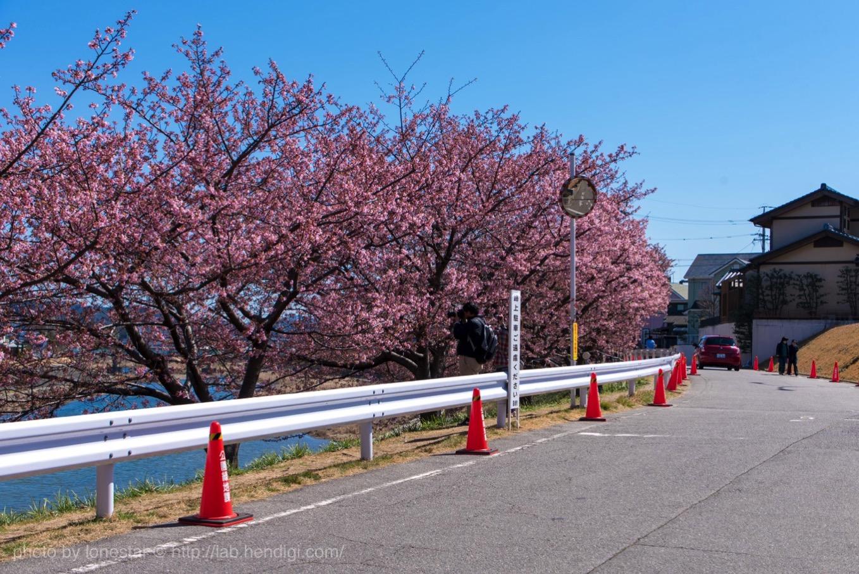 乙川 河津桜 駐車場