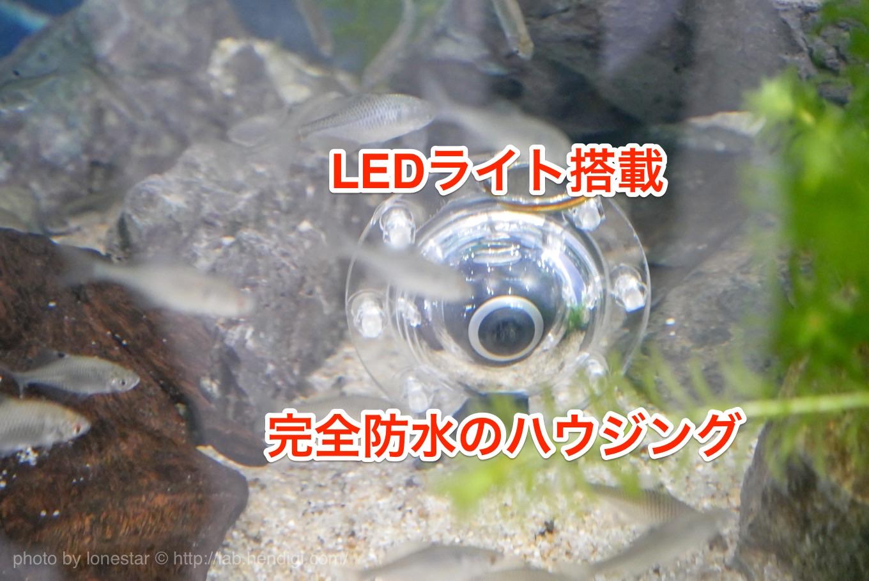 水族館 水中 撮影