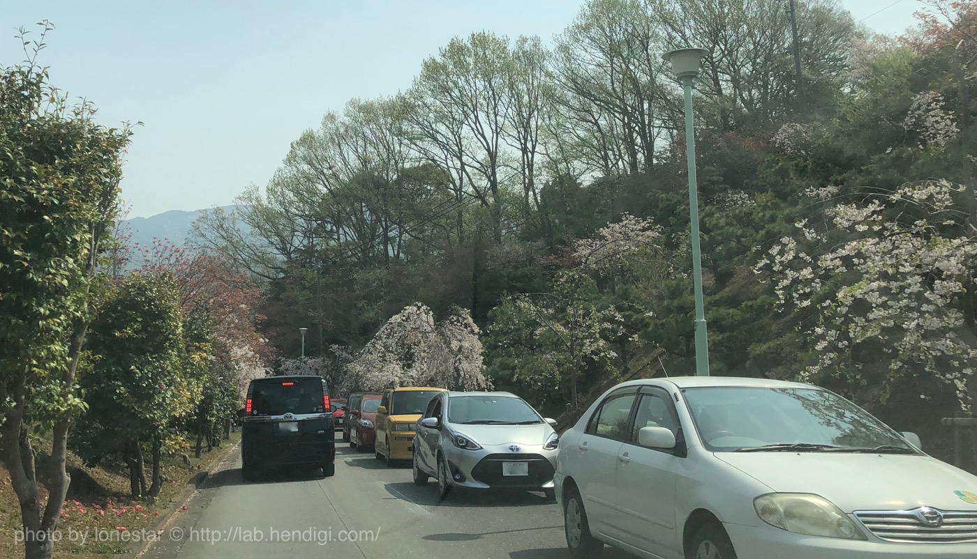 幸田町 しだれ桜まつり 渋滞