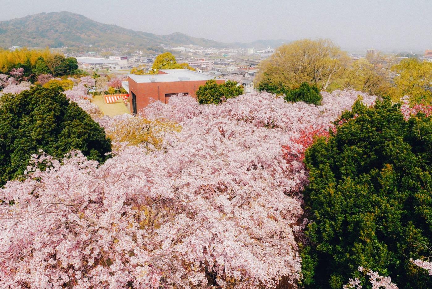 幸田町 さくら会館