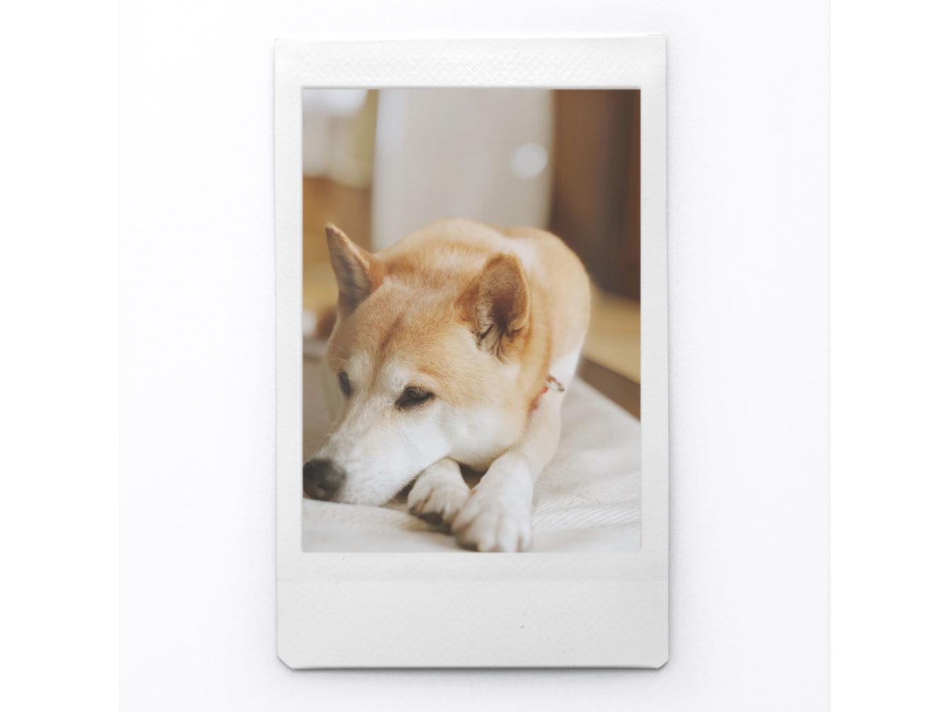 Instants - Instant Photo Maker