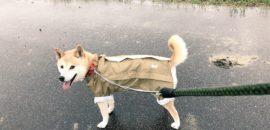 雨の日に写真を撮るアイデア8選