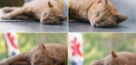 Apple純正アプリ「ショートカット」でブログ用のコラージュ写真を簡単に作る方法